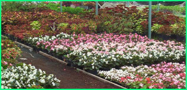Conocenos for Concepto de plantas ornamentales